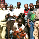 Group of men admiring village chickens - Tanzania Photo Credit M Wood,AIFSRC