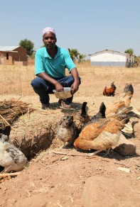 Farmer cultivating termites to provide extra protein for his chickens, Singida, Tanzania. (Photo: S Ingleton 360º)
